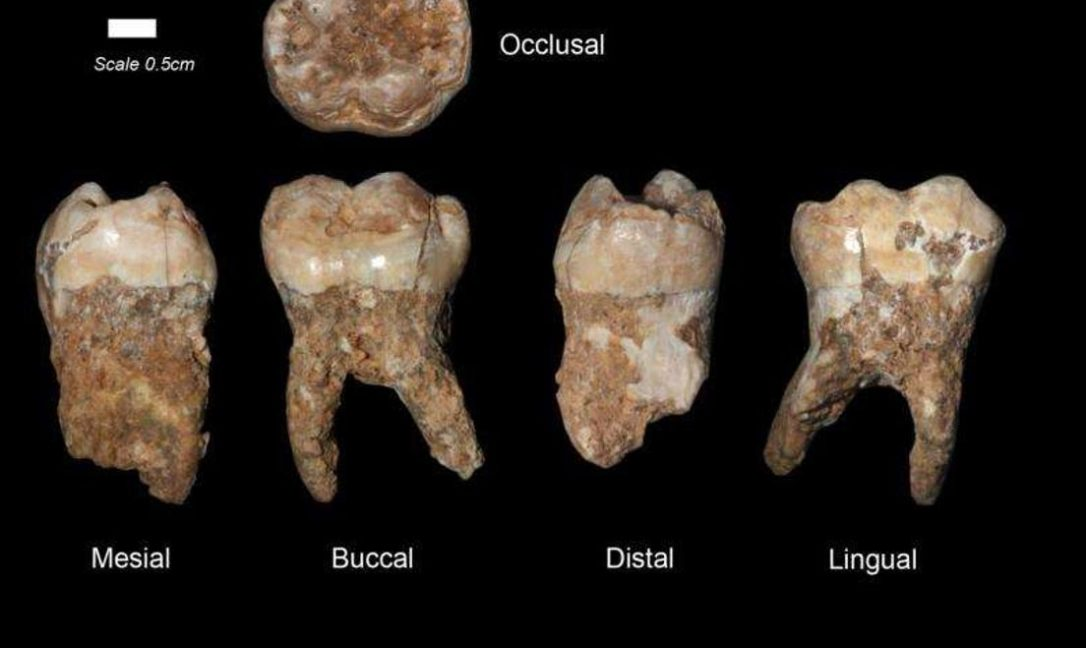 Ancient-teeth
